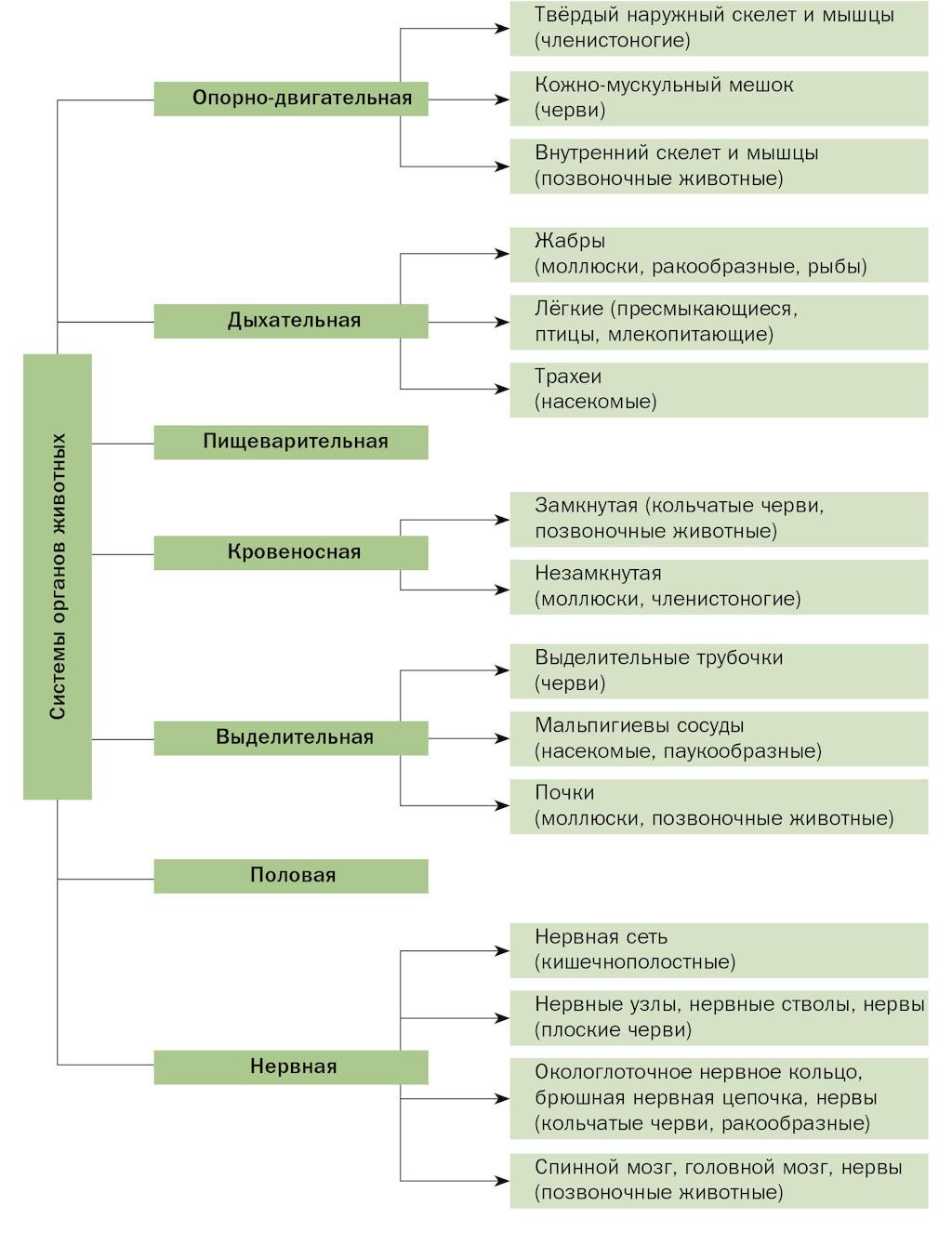 Системы органов животных схема